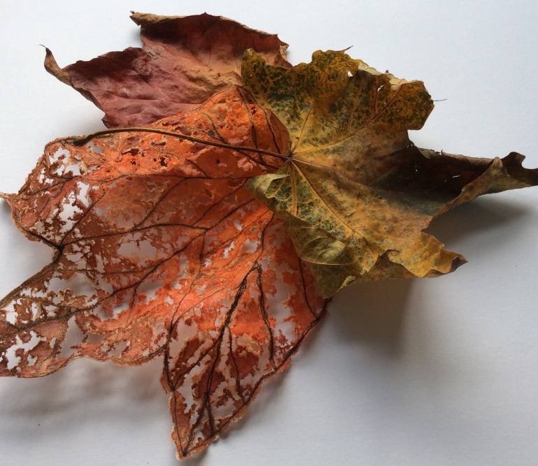 This is a photograph of two autumn leaves and a leaf skeleton I made from Lutradur.