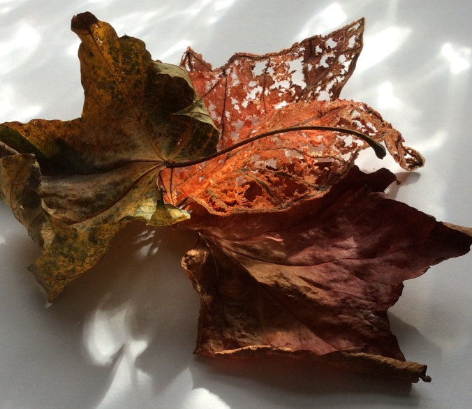 Three Autumn leaves, two real, the other handmade.